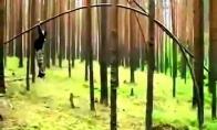 Miško pramogos
