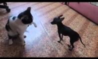 Katinas-monstras