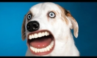 Jei šunys mokėtų kalbėti