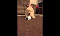 Šuo aptiko labai pavojingą daiktą