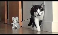 Naujas katino draugas