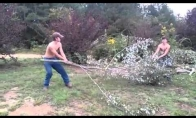 Medeinės kovos