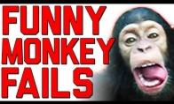 Naglų beždžionių rinkinys