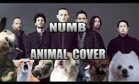 Dainuojantys gyvūnai
