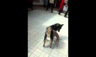 Šuo-masažuotojas