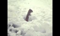 Šokis sniege