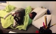 Šunelis nori, kad šeimininkas išsimiegotų