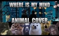 Dainuojantys gyvūnai [2 dalis]
