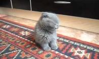 Kačiukas medituoja