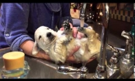 Rami šuns vonia
