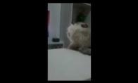 Piktas katinas