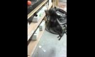 Šuo bando pasiekt kamuoliuką