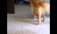 Šuns ir katino gyvenimas