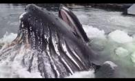Banginis nustebina poilsiautojus