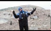 Pingvinų reakcija į operą