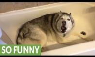 Šunelis nenori niekur eiti iš vonios