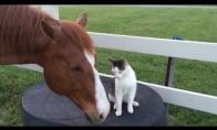 Katinas ir arklys geriausi draugai