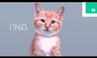 Kaip keitėsi katiniukų išvaizda per 100 metų
