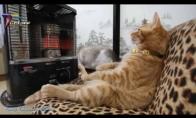 Juokingų katiniukų vaizdelių rinkinys