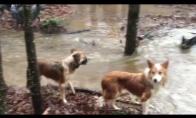Šunys išdarinėja neįtikėtinus triukus