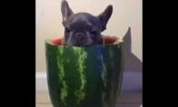 Kaip reikia valgyti arbūzą