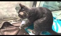 Katinas daro sau namelį