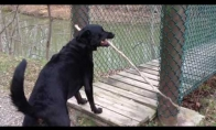 Šuo-durnelis