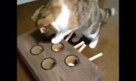 Smagus žaislas katei