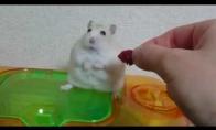 Žiurkėnas jaučiasi išduotas šeimininko