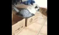 Visos dėžės katino
