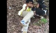 Šuniukai užpuolė berniuką