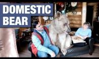 Rusų pora gyvena su suaugusiu lokiu