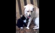 Gyvena kaip šuo su kate