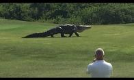 Milžiniškas golfo aikštyno gyventojas