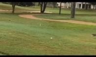 Paukštelis irgi nori pažaisti golfą