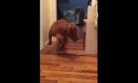 Šuo bando praeiti pro katiną jo nepažadinęs
