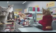 Mėmų katiniukai apsipirkinėja