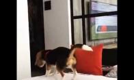 Šuo-nindzė