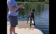 Šuo netyčia įkrito į upę