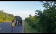 Maža mergaitė sustabdė dramblį