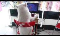 Šuo žaidžia DOTĄ