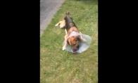 Nubaustas šuo