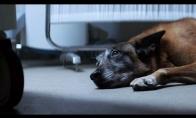 Filmukas apie šunų ištikimybę