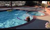 Meškis-plaukikas
