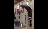 Arklys-krepšininkas