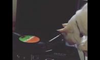 DJ katinas