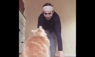 Katiniška joga