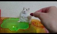 Žiurkėnas įsižeidė
