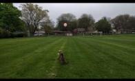 Šuo žaidžia su balionėliu