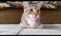 Kada katinas žiūri siaubo filmą